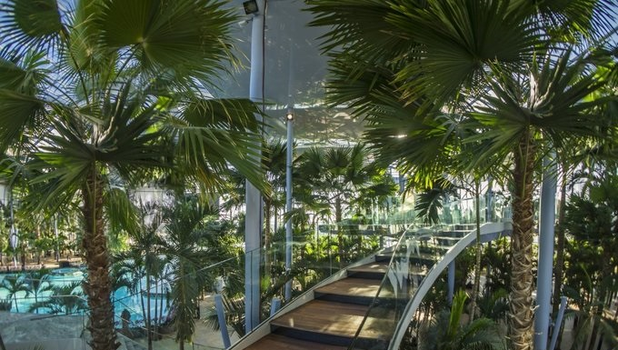 10 recorduri doborate de therme bucuresti fashionada - Tipi di palme da giardino ...